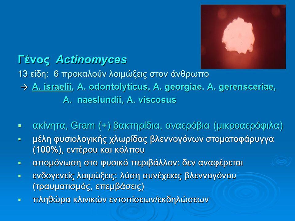Γένος Actinomyces 13 είδη: 6 προκαλούν λοιμώξεις στον άνθρωπο → A. israelii, A. odontolyticus, A. georgiae. A. gerensceriae, → A. israelii, A. odontol
