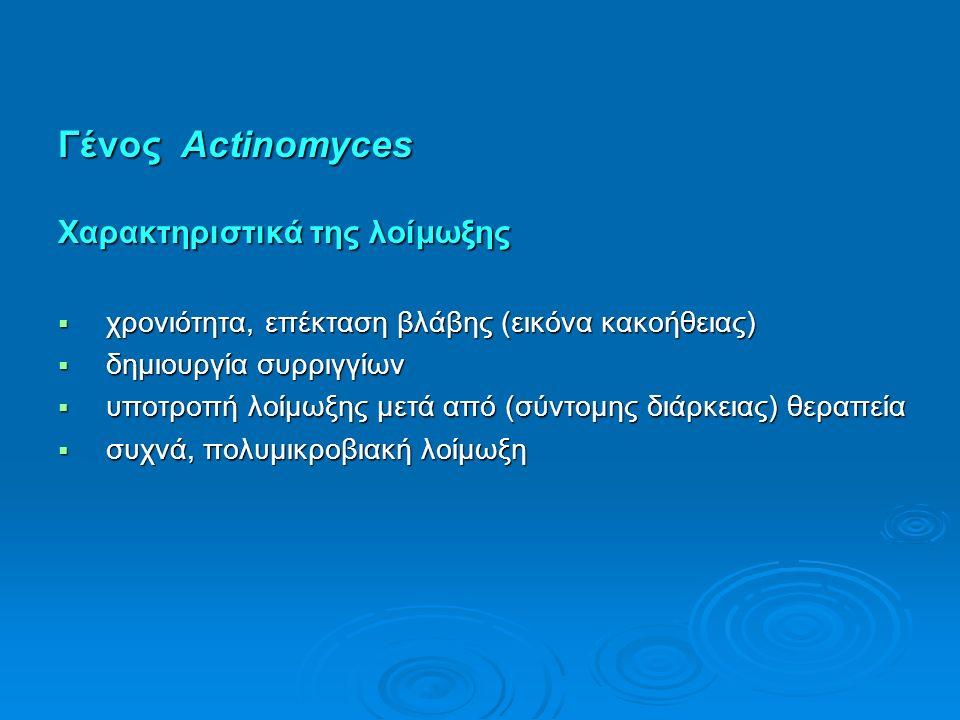 Γένος Actinomyces Χαρακτηριστικά της λοίμωξης  χρονιότητα, επέκταση βλάβης (εικόνα κακοήθειας)  δημιουργία συρριγγίων  υποτροπή λοίμωξης μετά από (σύντομης διάρκειας) θεραπεία  συχνά, πολυμικροβιακή λοίμωξη