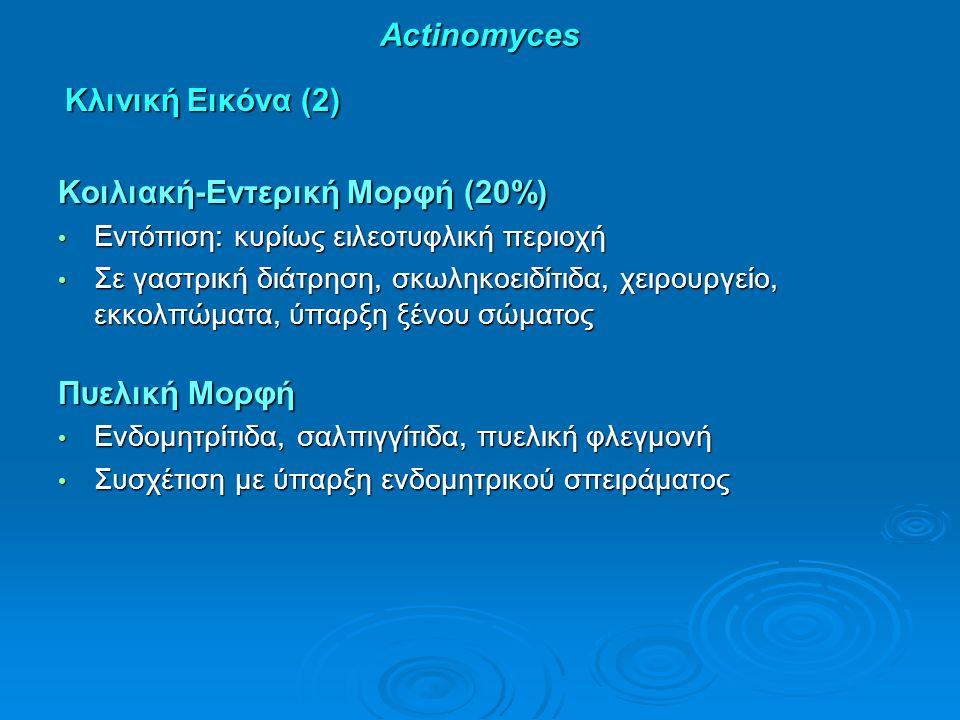 Actinomyces Κλινική Εικόνα (2) Κλινική Εικόνα (2) Κοιλιακή-Εντερική Μορφή (20%) Εντόπιση: κυρίως ειλεοτυφλική περιοχή Εντόπιση: κυρίως ειλεοτυφλική περιοχή Σε γαστρική διάτρηση, σκωληκοειδίτιδα, χειρουργείο, εκκολπώματα, ύπαρξη ξένου σώματος Σε γαστρική διάτρηση, σκωληκοειδίτιδα, χειρουργείο, εκκολπώματα, ύπαρξη ξένου σώματος Πυελική Μορφή Ενδομητρίτιδα, σαλπιγγίτιδα, πυελική φλεγμονή Ενδομητρίτιδα, σαλπιγγίτιδα, πυελική φλεγμονή Συσχέτιση με ύπαρξη ενδομητρικού σπειράματος Συσχέτιση με ύπαρξη ενδομητρικού σπειράματος
