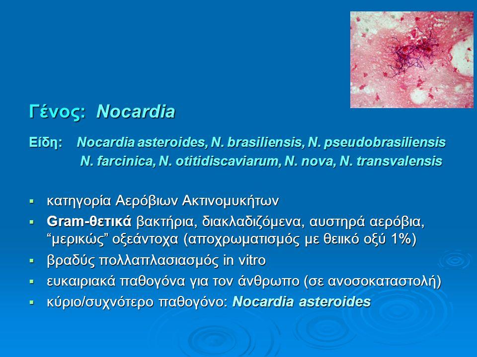 Γένος: Νocardia Είδη: Nocardia asteroides, N. brasiliensis, N. pseudobrasiliensis N. farcinica, Ν. otitidiscaviarum, N. nova, N. transvalensis N. farc