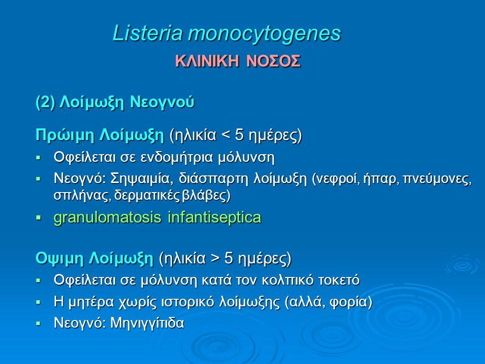 Listeria monocytogenes ΚΛΙΝΙΚΗ ΝΟΣΟΣ (2) Λοίμωξη Νεογνού Πρώιμη Λοίμωξη (ηλικία < 5 ημέρες)  Οφείλεται σε ενδομήτρια μόλυνση  Νεογνό: Σηψαιμία, διάσπαρτη λοίμωξη (νεφροί, ήπαρ, πνεύμονες, σπλήνας, δερματικές βλάβες)  granulomatosis infantiseptica Οψιμη Λοίμωξη (ηλικία > 5 ημέρες)  Οφείλεται σε μόλυνση κατά τον κολπικό τοκετό  Η μητέρα χωρίς ιστορικό λοίμωξης (αλλά, φορία)  Νεογνό: Μηνιγγίτιδα