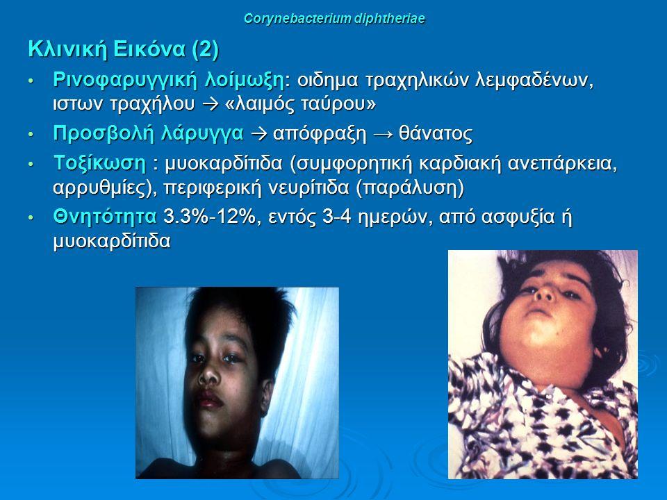 Corynebacterium diphtheriae Κλινική Εικόνα (2) Ρινοφαρυγγική λοίμωξη: οιδημα τραχηλικών λεμφαδένων, ιστων τραχήλου → «λαιμός ταύρου» Ρινοφαρυγγική λοίμωξη: οιδημα τραχηλικών λεμφαδένων, ιστων τραχήλου → «λαιμός ταύρου» Προσβολή λάρυγγα → απόφραξη → θάνατος Προσβολή λάρυγγα → απόφραξη → θάνατος Τοξίκωση : μυοκαρδίτιδα (συμφορητική καρδιακή ανεπάρκεια, αρρυθμίες), περιφερική νευρίτιδα (παράλυση) Τοξίκωση : μυοκαρδίτιδα (συμφορητική καρδιακή ανεπάρκεια, αρρυθμίες), περιφερική νευρίτιδα (παράλυση) Θνητότητα 3.3%-12%, εντός 3-4 ημερών, από ασφυξία ή μυοκαρδίτιδα Θνητότητα 3.3%-12%, εντός 3-4 ημερών, από ασφυξία ή μυοκαρδίτιδα