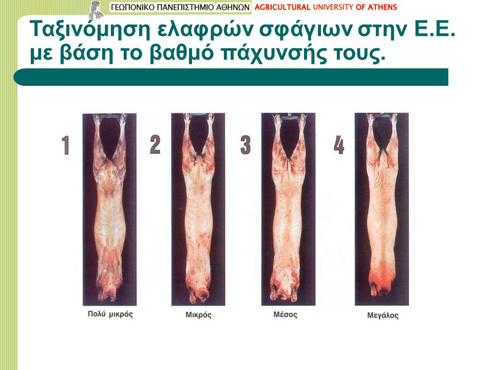 Ταξινόμηση ελαφρών σφάγιων στην Ε.Ε. με βάση το βαθμό πάχυνσής τους.