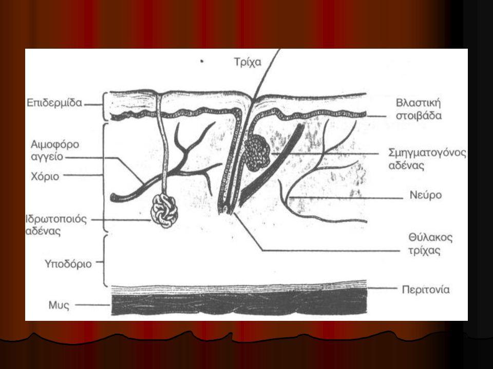 Χαρακτηρίζονται από ένα ιστορικό κάκωσης και τοπικά πόνο, οίδημα (πρήξιμο), ερυθρότητα, θερμότητα και εκχύμωση (μελάνιασμα).
