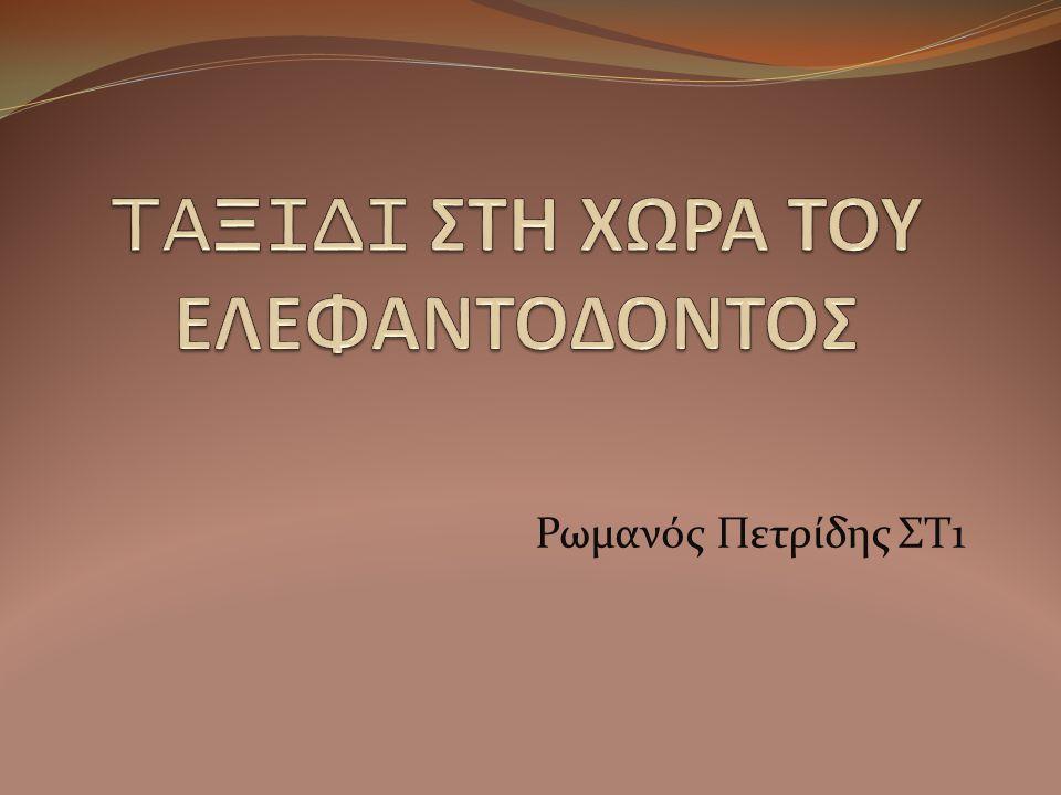 Ρωμανός Πετρίδης ΣΤ1