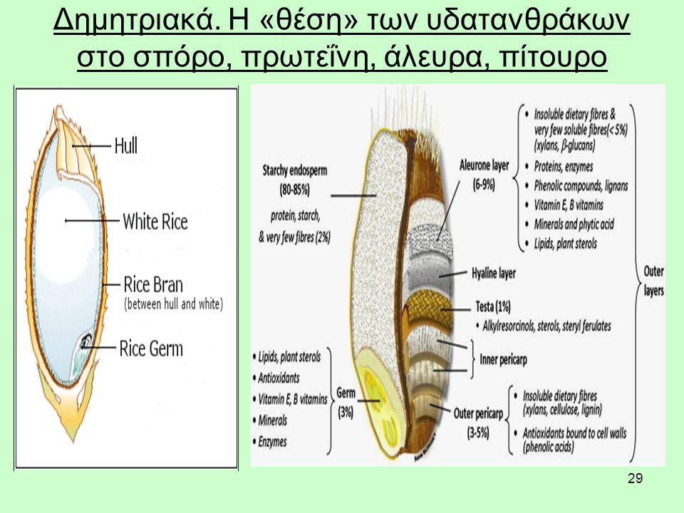 29 Δημητριακά. Η «θέση» των υδατανθράκων στο σπόρο, πρωτεΐνη, άλευρα, πίτουρο