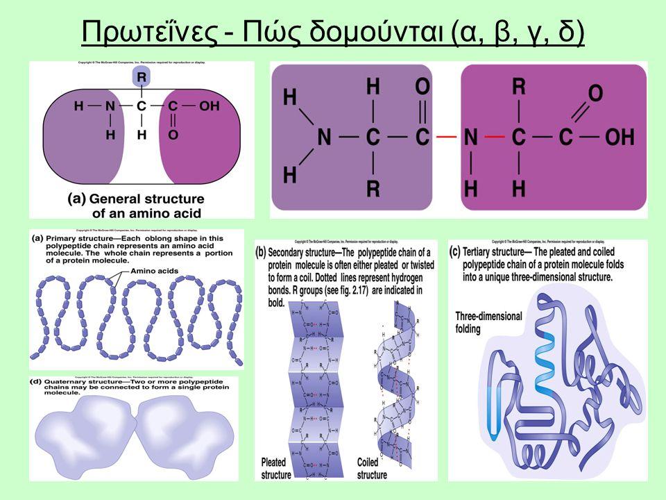 5 Πρωτεΐνες - Πώς δομούνται (α, β, γ, δ)