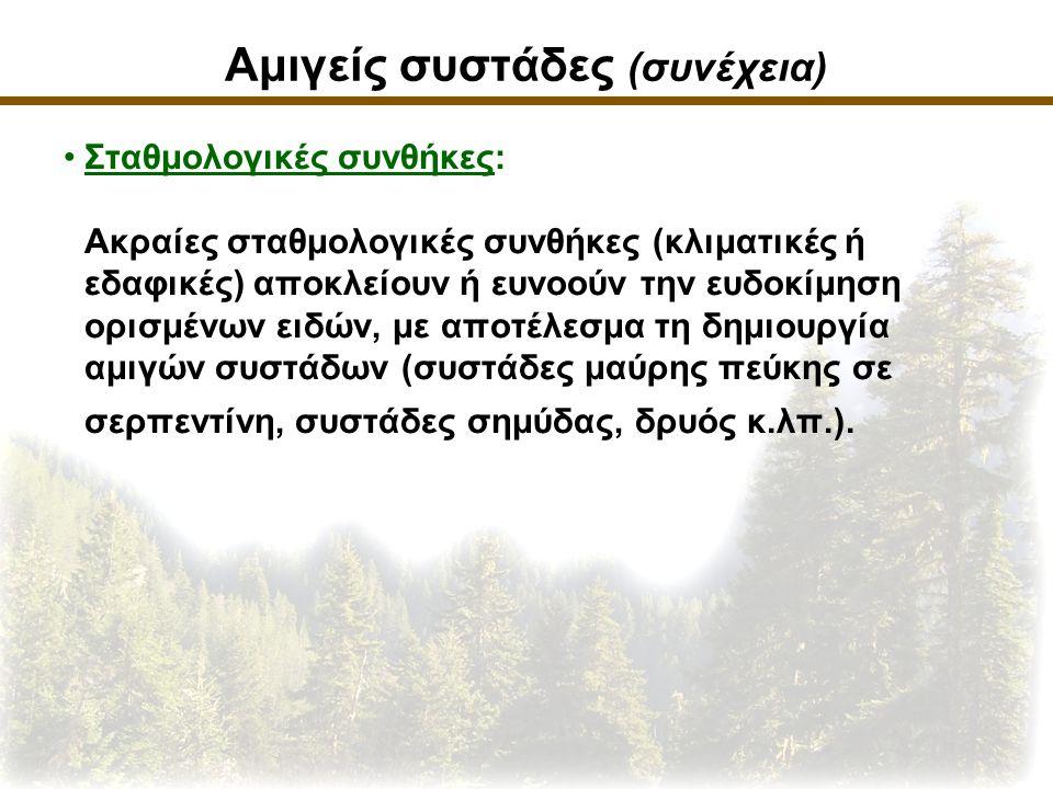 Αμιγείς συστάδες (συνέχεια) Σταθμολογικές συνθήκες: Ακραίες σταθμολογικές συνθήκες (κλιματικές ή εδαφικές) αποκλείουν ή ευνοούν την ευδοκίμηση ορισμένων ειδών, με αποτέλεσμα τη δημιουργία αμιγών συστάδων (συστάδες μαύρης πεύκης σε σερπεντίνη, συστάδες σημύδας, δρυός κ.λπ.).