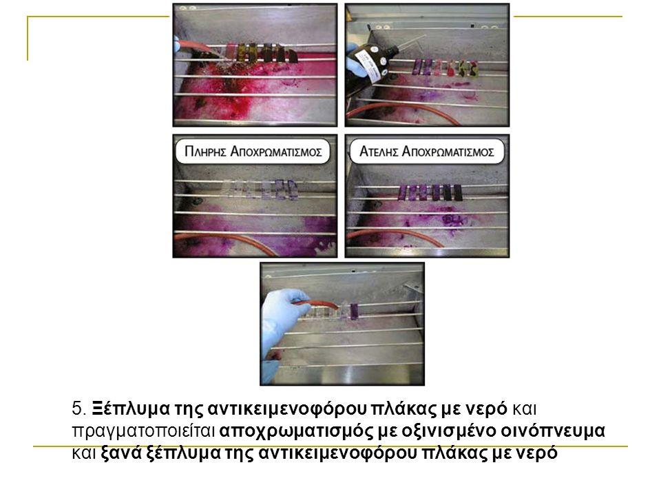 5. Ξέπλυμα της αντικειμενοφόρου πλάκας με νερό και πραγματοποιείται αποχρωματισμός με οξινισμένο οινόπνευμα και ξανά ξέπλυμα της αντικειμενοφόρου πλάκ