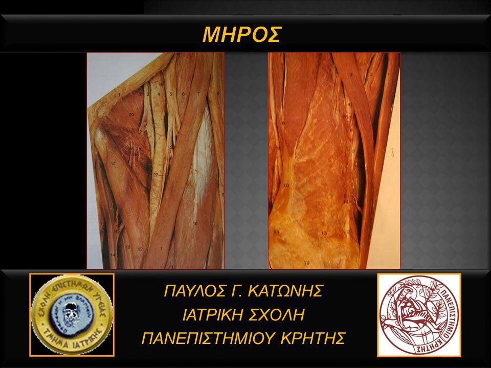  Περιοχή του κάτω άκρου, μεταξύ της άρθρωσης του ισχίου και του γόνατος, διαιρείται σε 3 διαμερίσματα (πρόσθιο, οπίσθιο, έσω).