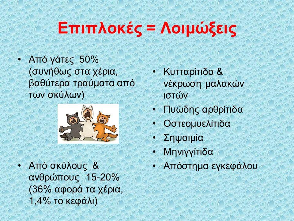 Επιπλοκές = Λοιμώξεις Από γάτες 50% (συνήθως στα χέρια, βαθύτερα τραύματα από των σκύλων) Από σκύλους & ανθρώπους 15-20% (36% αφορά τα χέρια, 1,4% το κεφάλι) Κυτταρίτιδα & νέκρωση μαλακών ιστών Πυώδης αρθρίτιδα Οστεομυελίτιδα Σηψαιμία Μηνιγγίτιδα Απόστημα εγκεφάλου