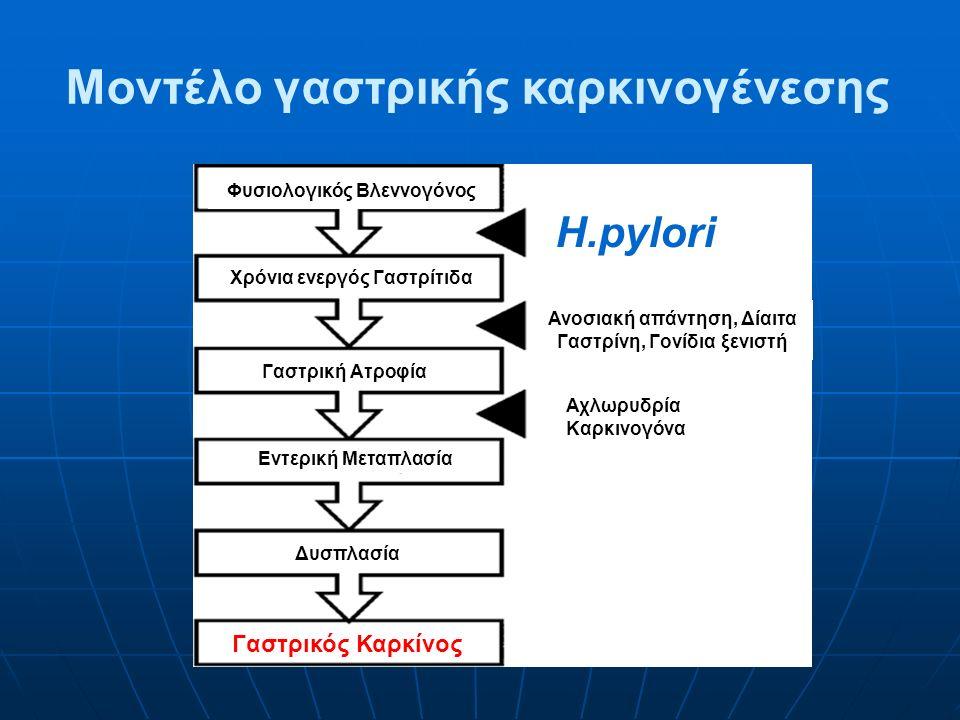 Μοντέλο γαστρικής καρκινογένεσης Φυσιολογικός Βλεννογόνος Χρόνια ενεργός Γαστρίτιδα Γαστρική Ατροφία Εντερική Μεταπλασία H.pylori Δυσπλασία Γαστρικός Καρκίνος Ανοσιακή απάντηση, Δίαιτα Γαστρίνη, Γονίδια ξενιστή Αχλωρυδρία Καρκινογόνα