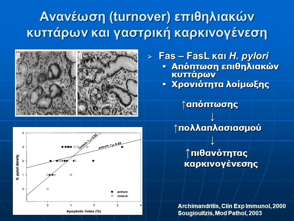 Ανανέωση (turnover) επιθηλιακών κυττάρων και γαστρική καρκινογένεση  Fas – FasL και H.