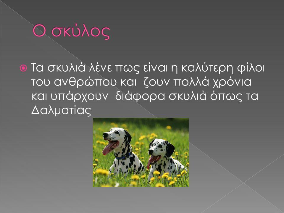  Τα σκυλιά λένε πως είναι η καλύτερη φίλοι του ανθρώπου και ζουν πολλά χρόνια και υπάρχουν διάφορα σκυλιά όπως τα Δαλματίας