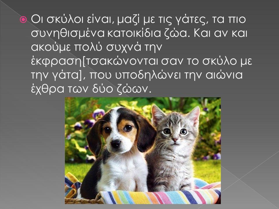  Οι σκύλοι είναι, μαζί με τις γάτες, τα πιο συνηθισμένα κατοικίδια ζώα. Και αν και ακούμε πολύ συχνά την έκφραση[τσακώνονται σαν το σκύλο με την γάτα