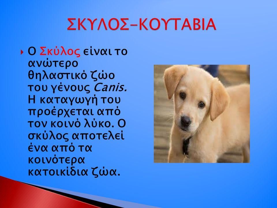  O Σκύλος είναι το ανώτερο θηλαστικό ζώο του γένους Canis. Η καταγωγή του προέρχεται από τον κοινό λύκο. Ο σκύλος αποτελεί ένα από τα κοινότερα κατοι