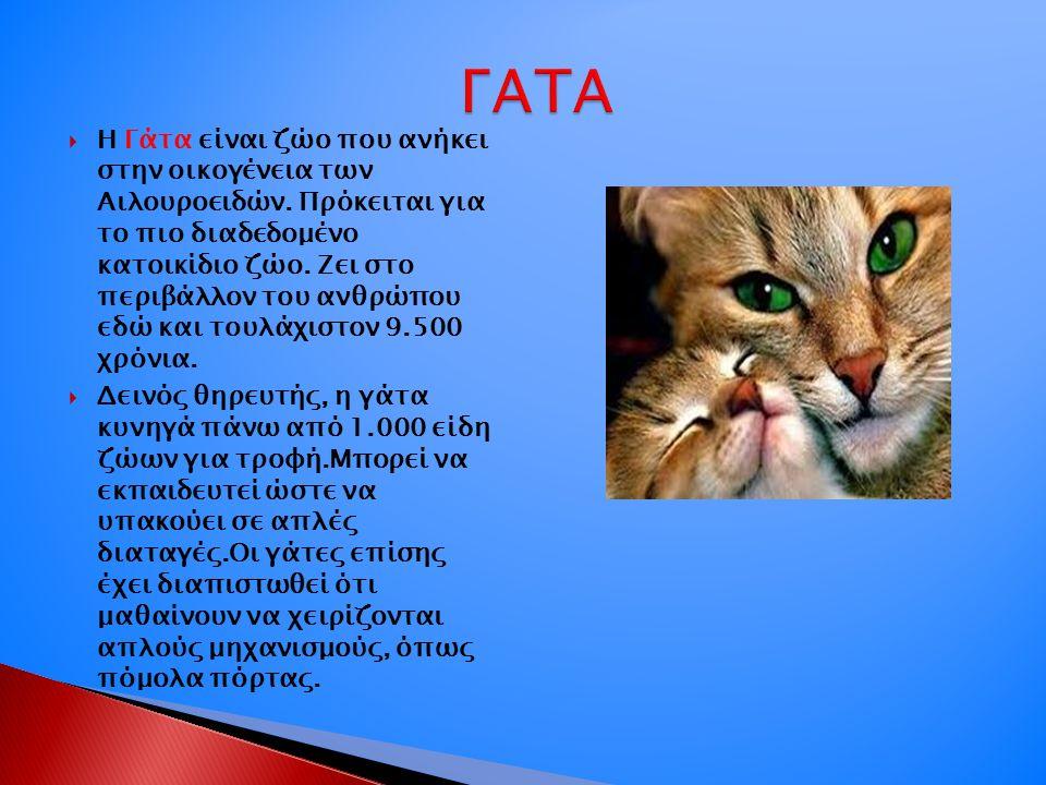  Η Γάτα είναι ζώο που ανήκει στην οικογένεια των Αιλουροειδών. Πρόκειται για το πιο διαδεδομένο κατοικίδιο ζώο. Ζει στο περιβάλλον του ανθρώπου εδώ κ
