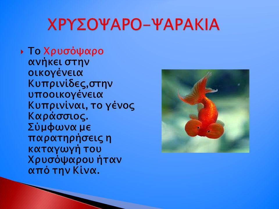  Το Χρυσόψαρο ανήκει στην οικογένεια Κυπρινίδες,στην υποοικογένεια Κυπρινίναι, το γένος Καράσσιος. Σύμφωνα με παρατηρήσεις η καταγωγή του Χρυσόψαρου