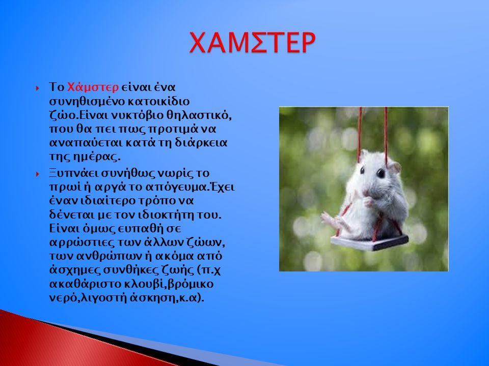  Το Χάμστερ είναι ένα συνηθισμένο κατοικίδιο ζώο.Είναι νυκτόβιο θηλαστικό, που θα πει πως προτιμά να αναπαύεται κατά τη διάρκεια της ημέρας.
