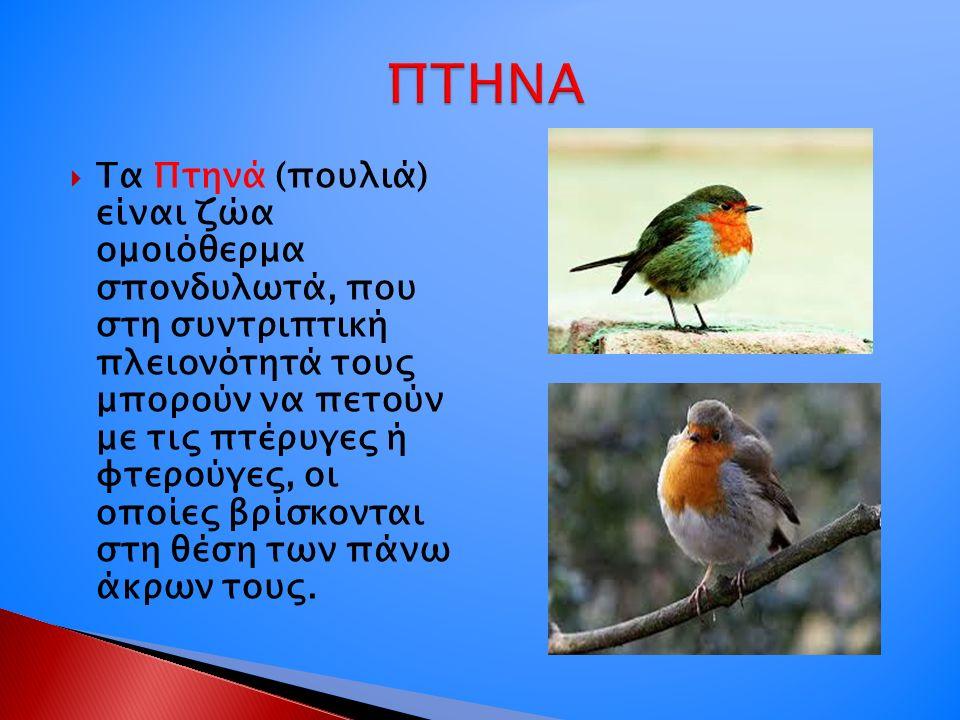  Τα Πτηνά (πουλιά) είναι ζώα ομοιόθερμα σπονδυλωτά, που στη συντριπτική πλειονότητά τους μπορούν να πετούν με τις πτέρυγες ή φτερούγες, οι οποίες βρίσκονται στη θέση των πάνω άκρων τους.
