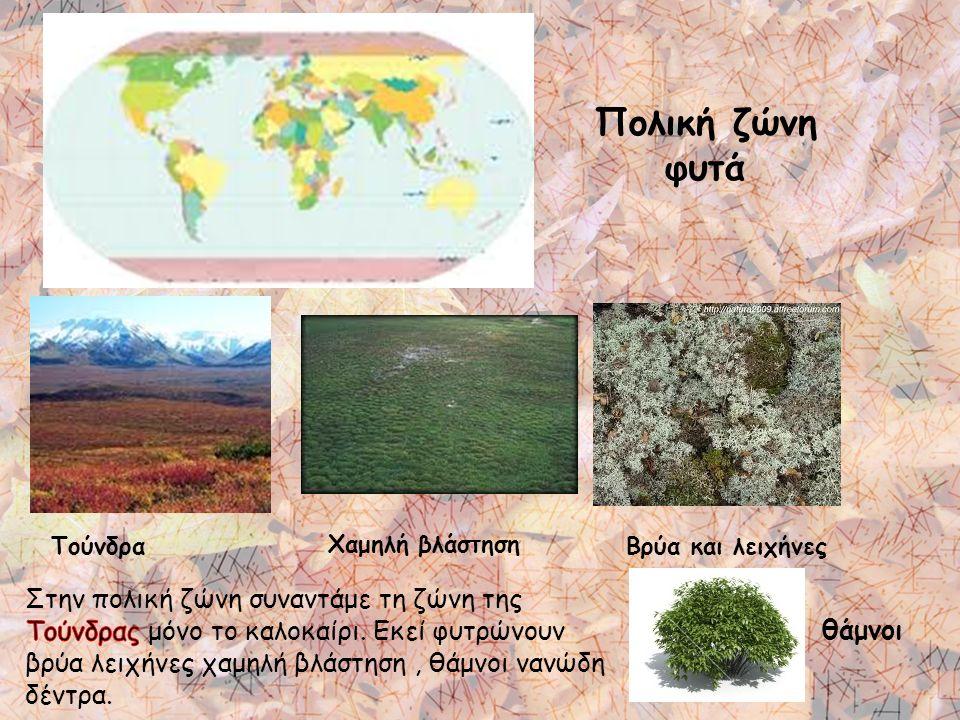 Πολική ζώνη φυτά Τούνδρα Χαμηλή βλάστηση Βρύα και λειχήνες θάμνοι