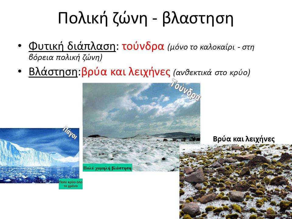 Πολική ζώνη - βλαστηση Φυτική διάπλαση: τούνδρα (μόνο το καλοκαίρι - στη βόρεια πολική ζώνη) Βλάστηση:βρύα και λειχήνες (ανθεκτικά στο κρύο) Βρύα και λειχήνες