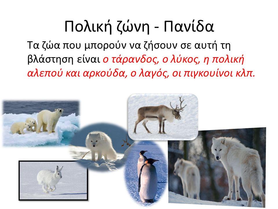 Πολική ζώνη - Πανίδα Τα ζώα που μπορούν να ζήσουν σε αυτή τη βλάστηση είναι ο τάρανδος, ο λύκος, η πολική αλεπού και αρκούδα, ο λαγός, οι πιγκουίνοι κλπ.