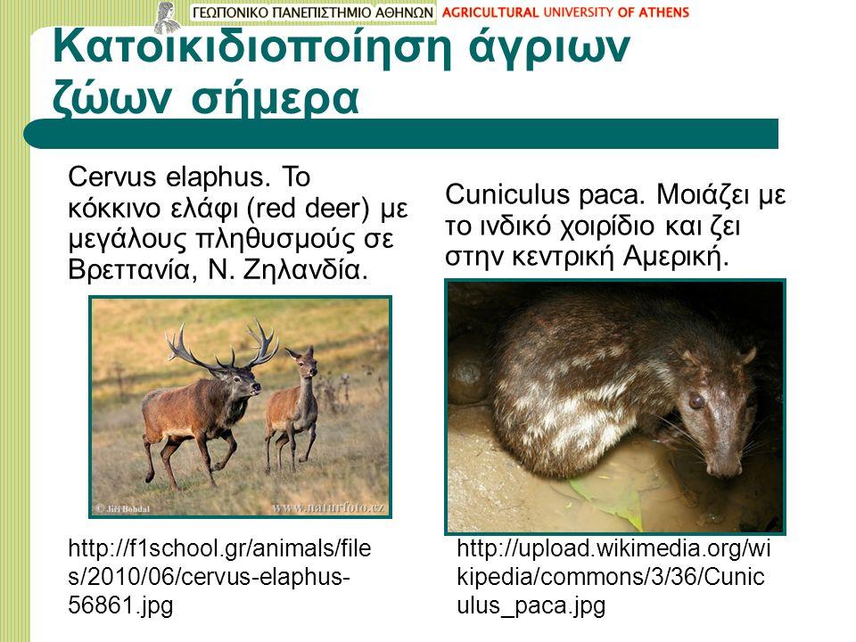 Kατοικιδιοποίηση άγριων ζώων σήμερα Cervus elaphus. Το κόκκινο ελάφι (red deer) με μεγάλους πληθυσμούς σε Βρεττανία, Ν. Ζηλανδία. http://f1school.gr/a