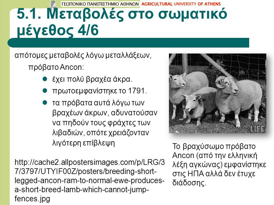 5.1. Μεταβολές στο σωματικό μέγεθος 4/6 απότομες μεταβολές λόγω μεταλλάξεων, πρόβατο Αncοn: έχει πολύ βραχέα άκρα. πρωτοεμφανίστηκε το 1791. τα πρόβατ
