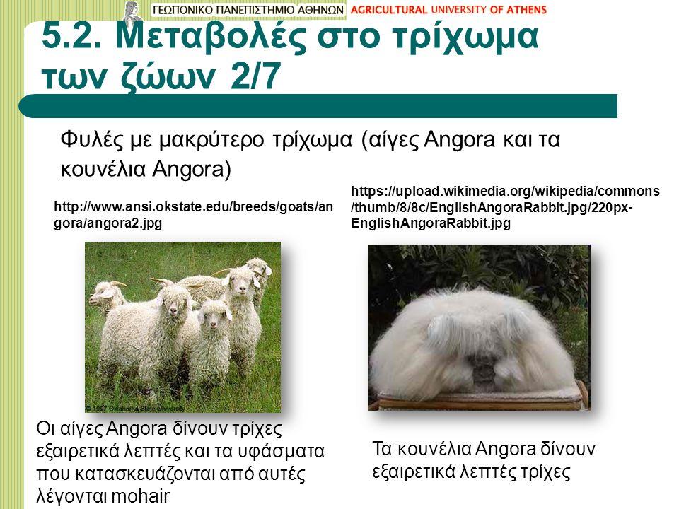 5.2. Μεταβολές στο τρίχωμα των ζώων 2/7 Φυλές με μακρύτερο τρίχωμα (αίγες Angora και τα κουνέλια Angora) http://www.ansi.okstate.edu/breeds/goats/an g