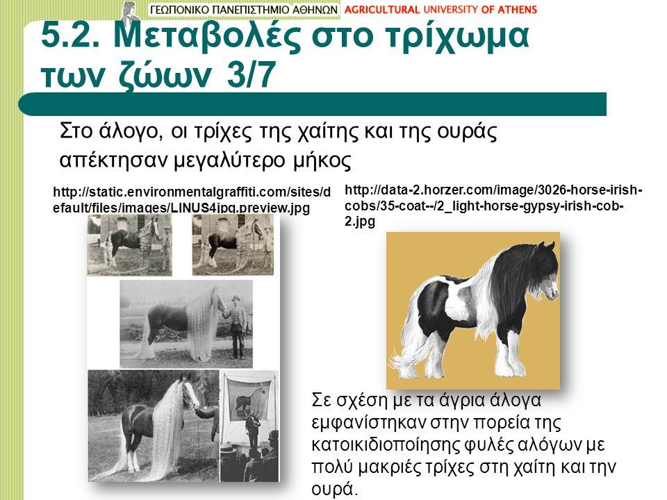 5.2. Μεταβολές στο τρίχωμα των ζώων 3/7 Στο άλογο, οι τρίχες της χαίτης και της ουράς απέκτησαν μεγαλύτερο μήκος http://static.environmentalgraffiti.c