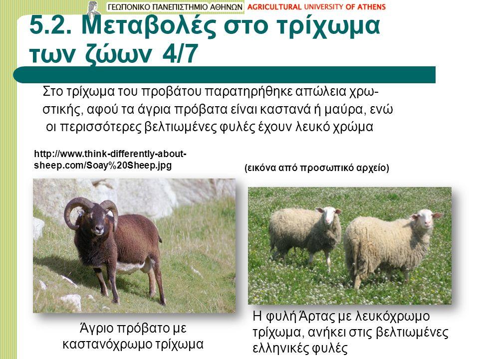 5.2. Μεταβολές στο τρίχωμα των ζώων 4/7 Στο τρίχωμα του προβάτου παρατηρήθηκε απώλεια χρω- στικής, αφού τα άγρια πρόβατα είναι καστανά ή μαύρα, ενώ οι