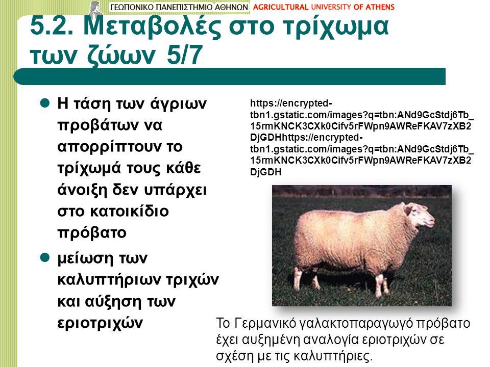 5.2. Μεταβολές στο τρίχωμα των ζώων 5/7 Η τάση των άγριων προβάτων να απορρίπτουν το τρίχωμά τους κάθε άνοιξη δεν υπάρχει στο κατοικίδιο πρόβατο μείωσ