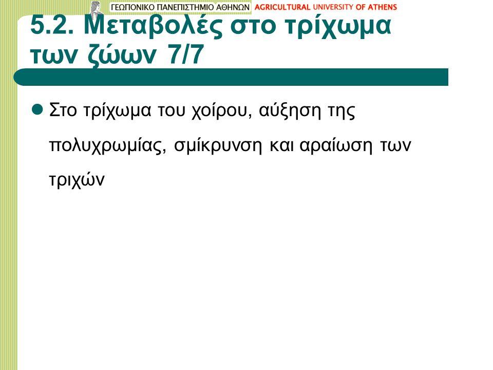 5.2. Μεταβολές στο τρίχωμα των ζώων 7/7 Στο τρίχωμα του χοίρου, αύξηση της πολυχρωμίας, σμίκρυνση και αραίωση των τριχών