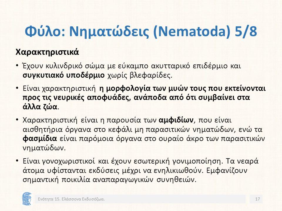 Φύλο: Νηματώδεις (Nematoda) 5/8 Χαρακτηριστικά Έχουν κυλινδρικό σώμα με εύκαμπο ακυτταρικό επιδέρμιο και συγκυτιακό υποδέρμιο χωρίς βλεφαρίδες.