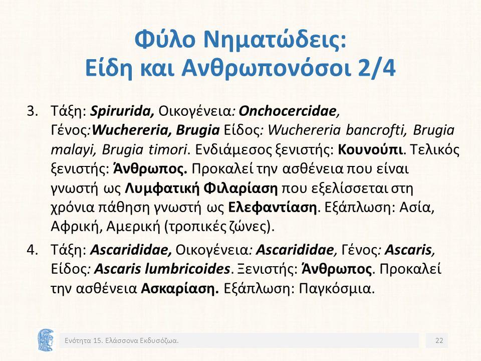 Φύλο Νηματώδεις: Είδη και Ανθρωπονόσοι 2/4 3.Τάξη: Spirurida, Οικογένεια: Onchocercidae, Γένος:Wuchereria, Brugia Είδος: Wuchereria bancrofti, Brugia malayi, Brugia timori.