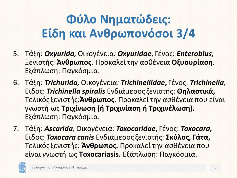 Φύλο Νηματώδεις: Είδη και Ανθρωπονόσοι 3/4 5.Τάξη: Oxyurida, Οικογένεια: Oxyuridae, Γένος: Enterobius, Ξενιστής: Άνθρωπος.