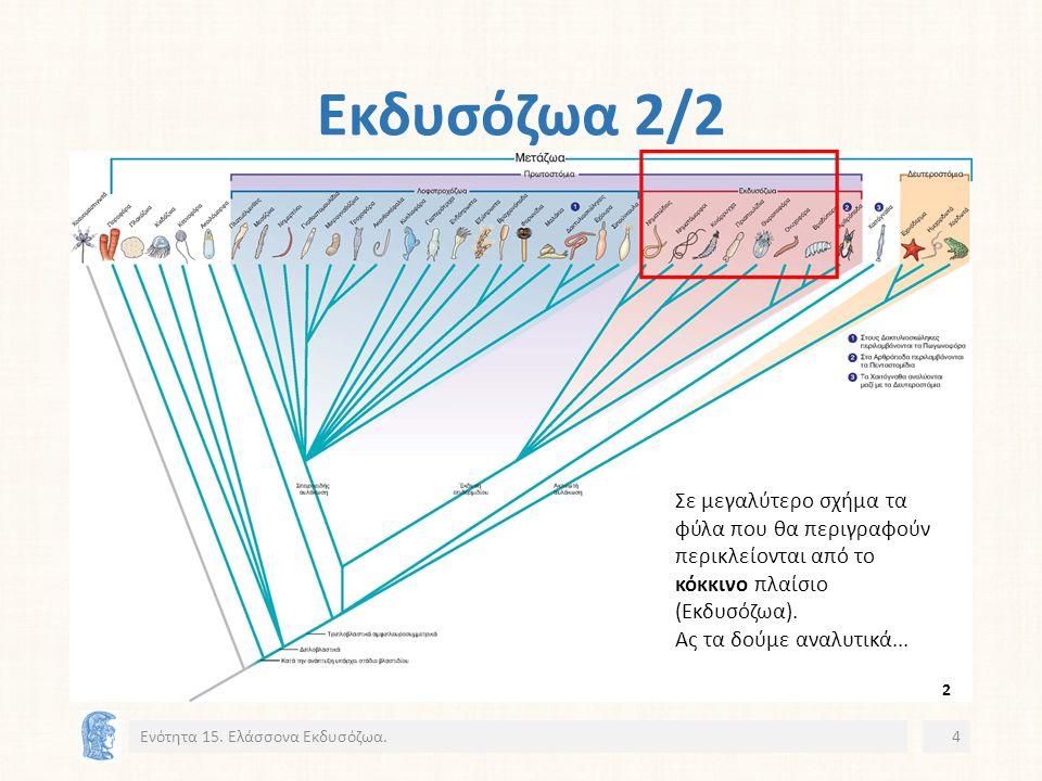 Νηματώδεις: Ασθένειες Toxocariasis 1/2 Ενότητα 15.