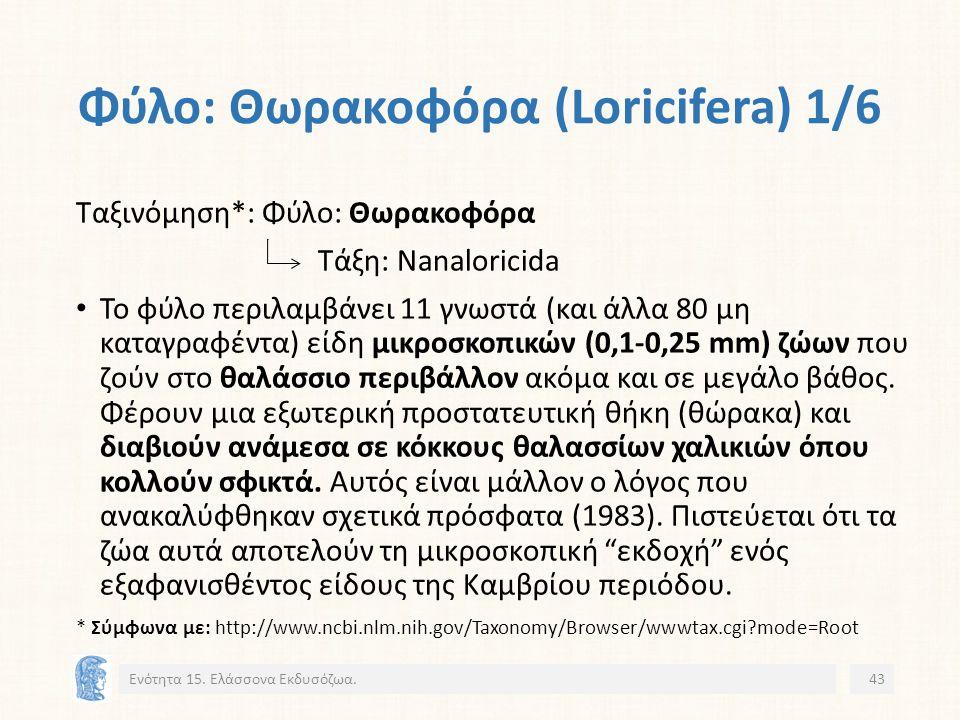 Φύλο: Θωρακοφόρα (Loricifera) 1/6 Ενότητα 15.