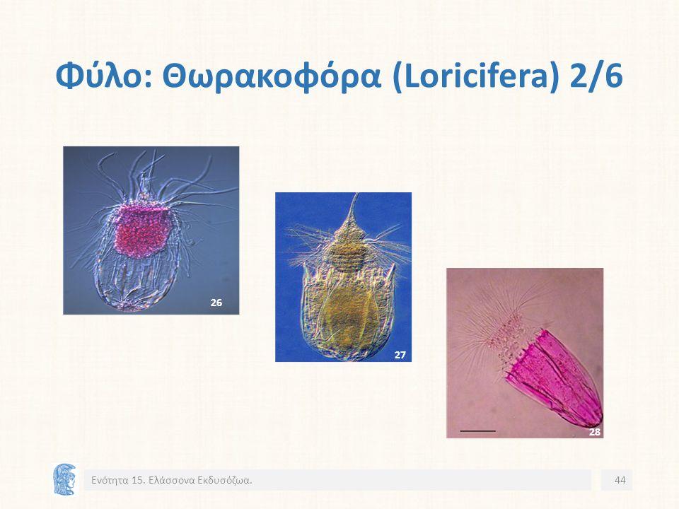 Φύλο: Θωρακοφόρα (Loricifera) 2/6 Ενότητα 15. Ελάσσονα Εκδυσόζωα.44 26 27 28