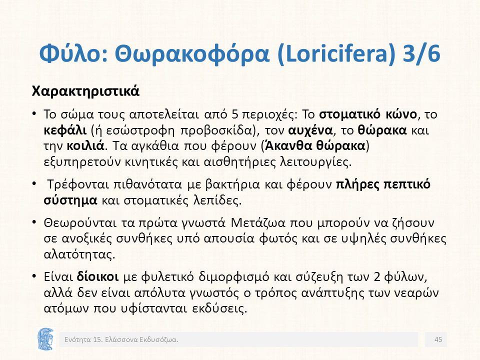 Φύλο: Θωρακοφόρα (Loricifera) 3/6 Ενότητα 15.
