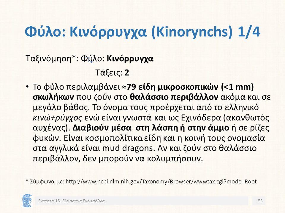 Φύλο: Κινόρρυγχα (Kinorynchs) 1/4 Ενότητα 15.