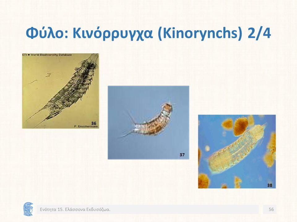 Φύλο: Κινόρρυγχα (Kinorynchs) 2/4 Ενότητα 15. Ελάσσονα Εκδυσόζωα.56 36 37 38