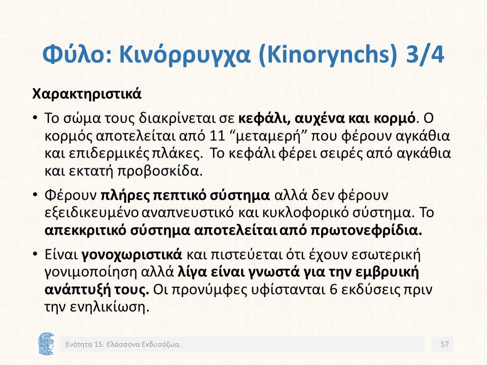Φύλο: Κινόρρυγχα (Kinorynchs) 3/4 Ενότητα 15.