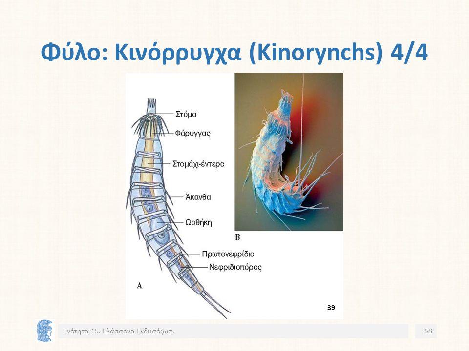 Φύλο: Κινόρρυγχα (Kinorynchs) 4/4 Ενότητα 15. Ελάσσονα Εκδυσόζωα.58 39