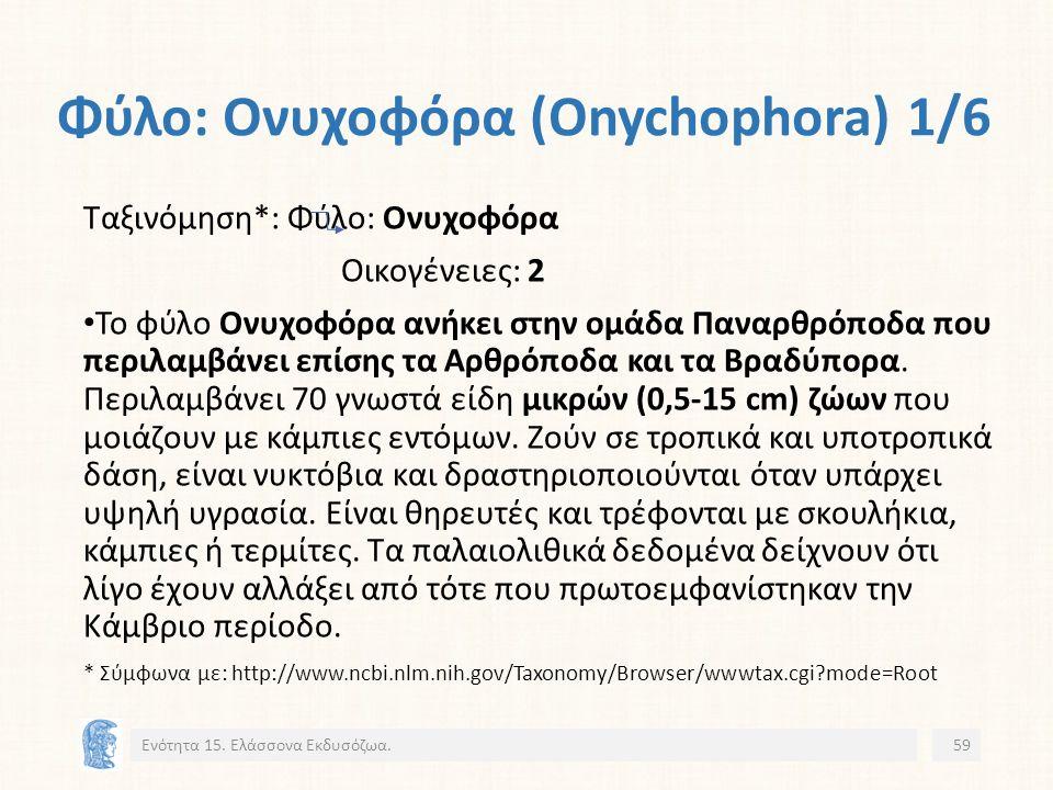 Φύλο: Ονυχοφόρα (Onychophora) 1/6 Ενότητα 15.