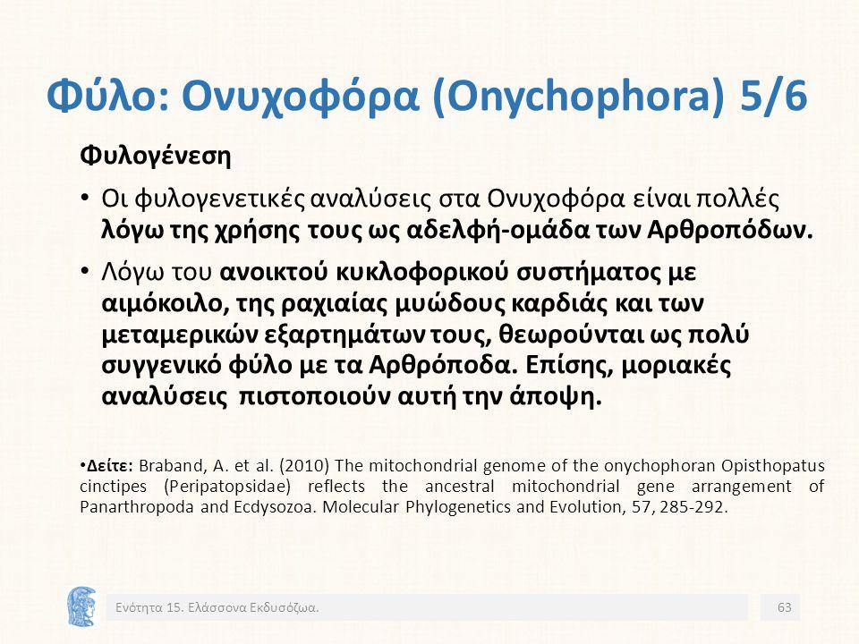 Φύλο: Ονυχοφόρα (Onychophora) 5/6 Ενότητα 15.