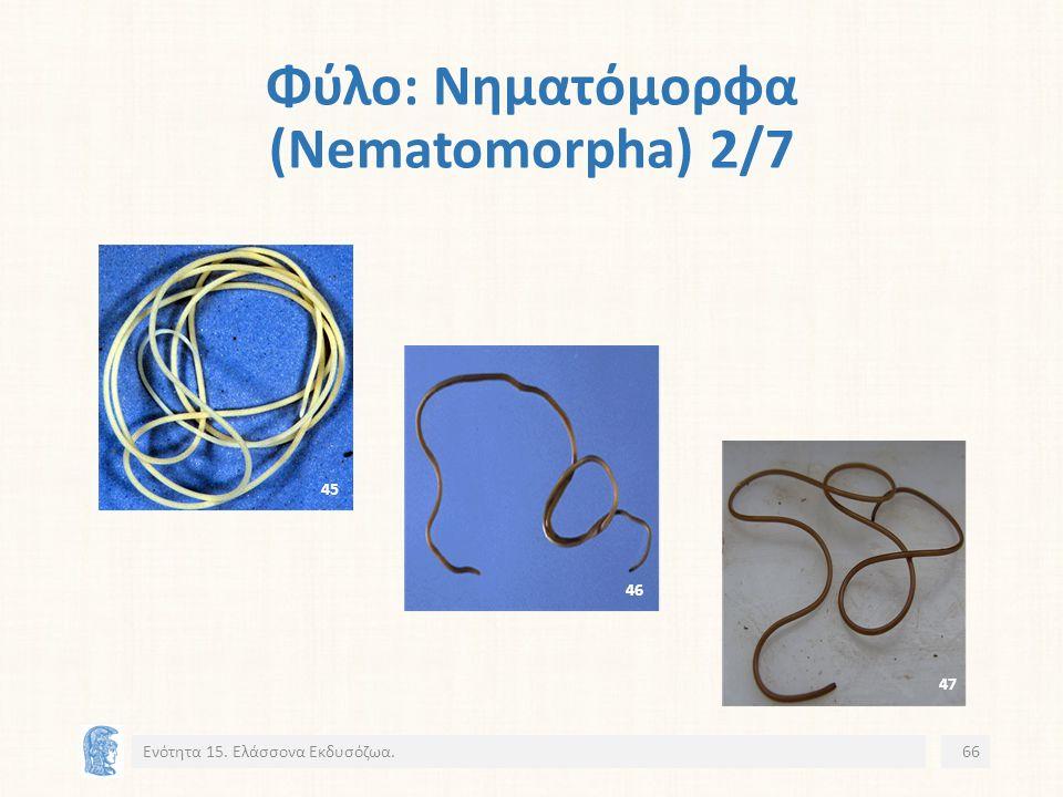 Φύλο: Νηματόμορφα (Nematomorpha) 2/7 Ενότητα 15. Ελάσσονα Εκδυσόζωα.66 45 46 47