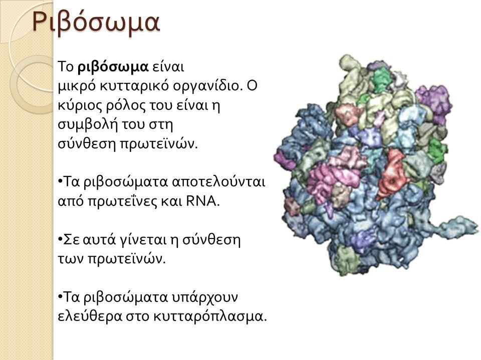 Το ριβόσωμα είναι μικρό κυτταρικό οργανίδιο.