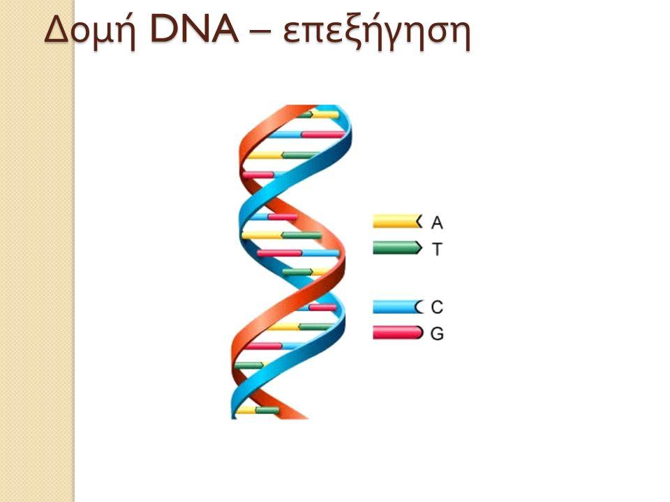 Δομή DNA – επεξήγηση